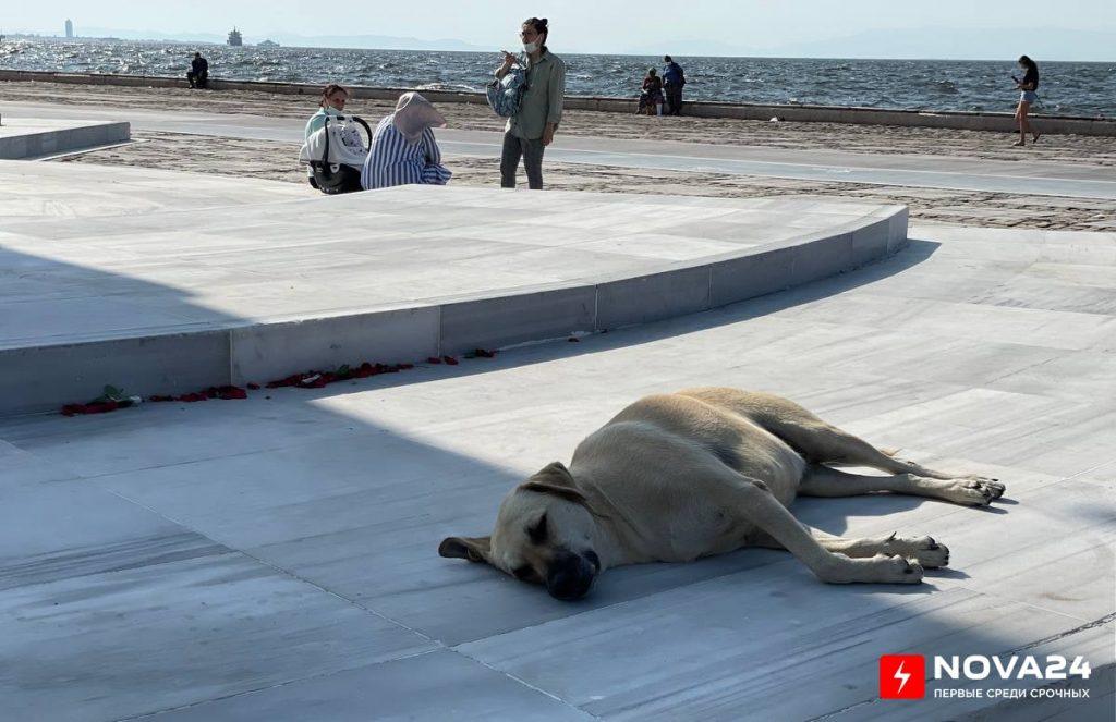 Воевавший журналист, часовня правителю и порт Густава Эйфеля: чем привлекает турецкий город Измир — фоторепортаж