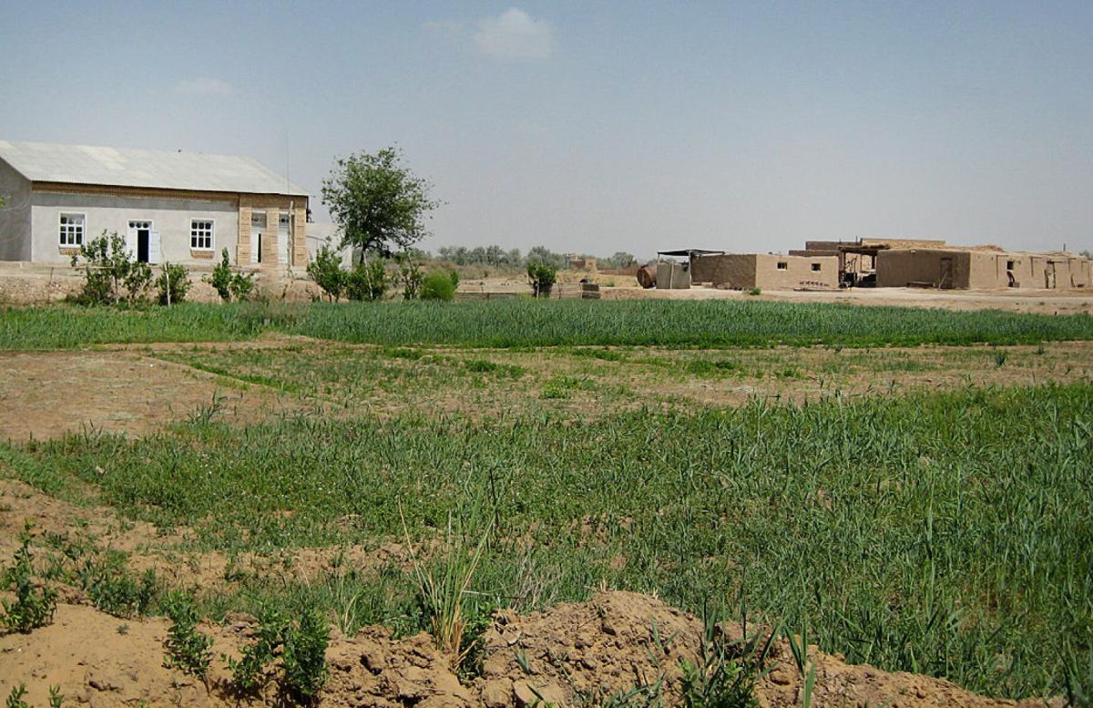 В Хорезме задержали пытавшихся продать участок земли мошенников