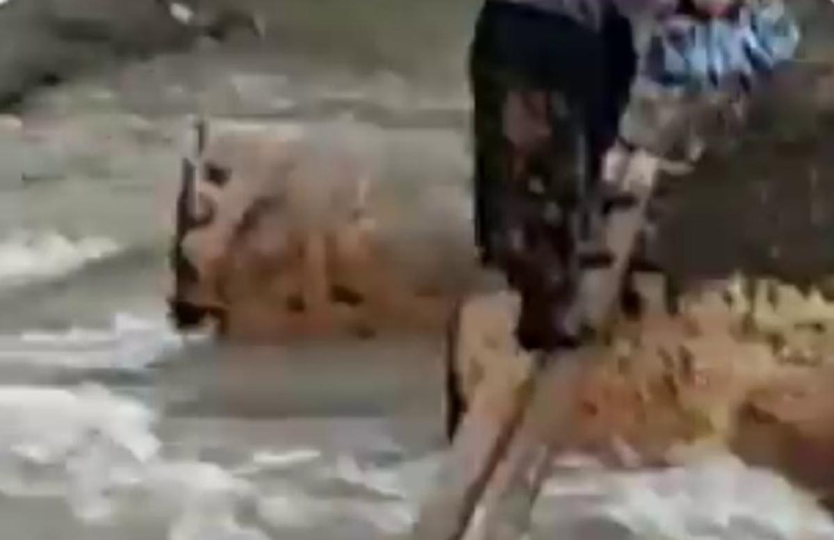 Андижанец самовольно смастерил мост через речку и брал с жителей деньги за проход