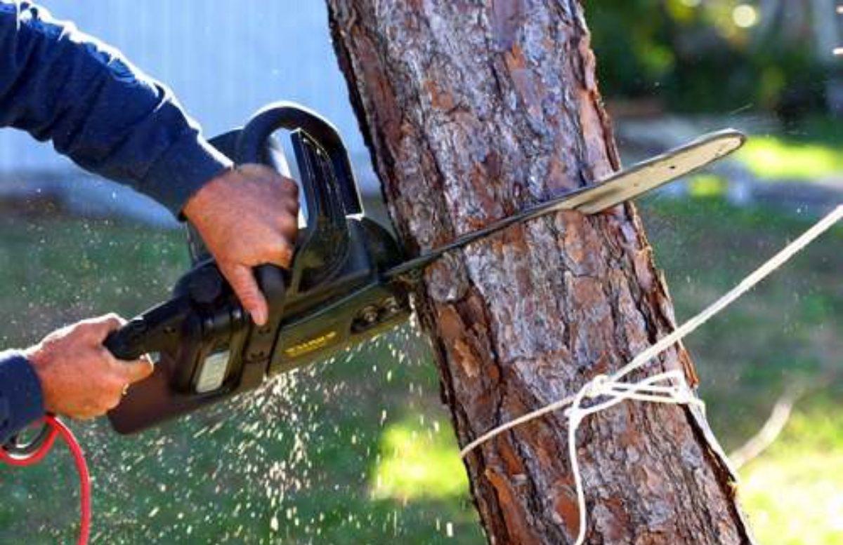 Стало известно, сколько деревьев узбекистанцы срубили за полгода
