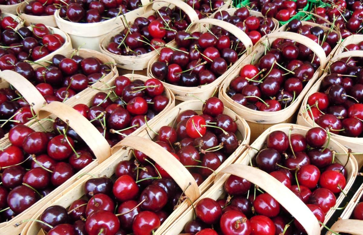 Стало известно, сколько вишни экспортировала Ферганская область