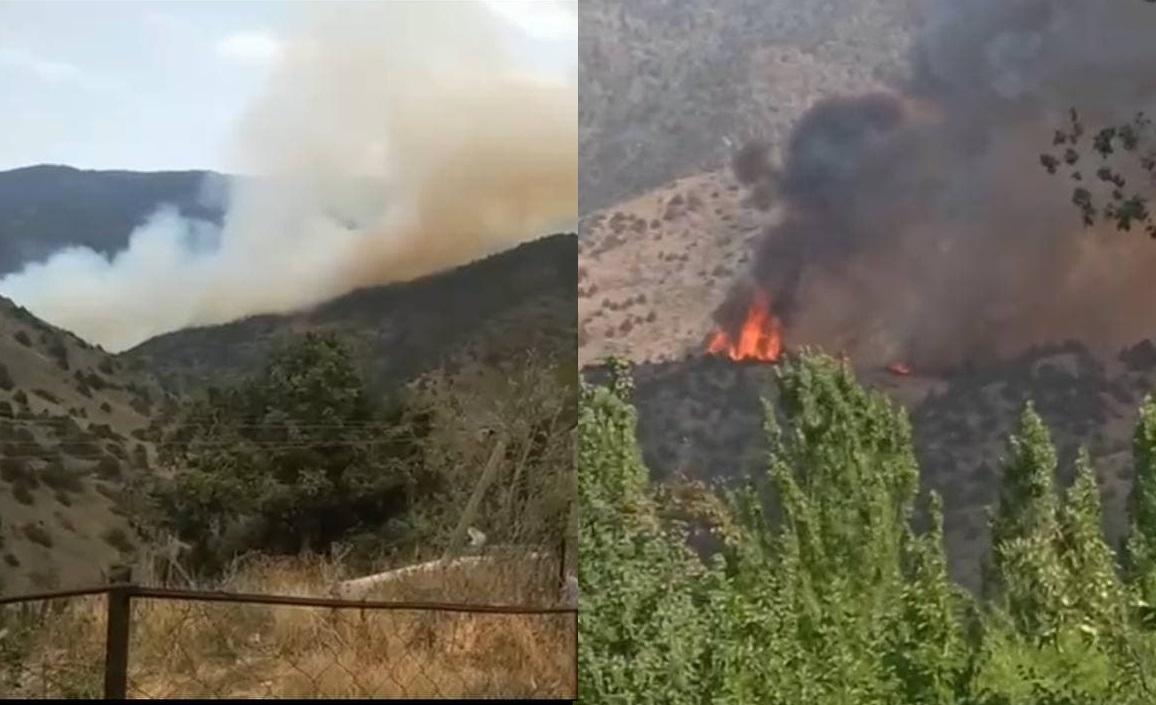 В горах Заамина в Джизаке разгорелся крупный пожар — видео