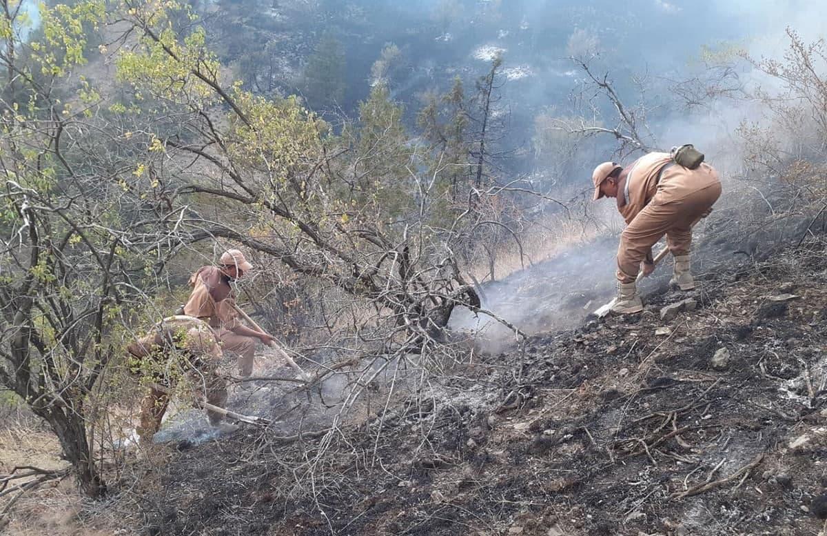 Пожар в Зааминских горах успешно потушили
