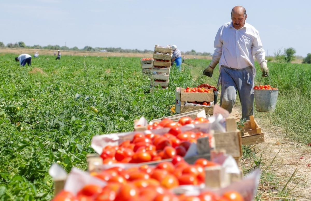 Госкомстат назвал лидирующий по выращиванию овощей регион страны