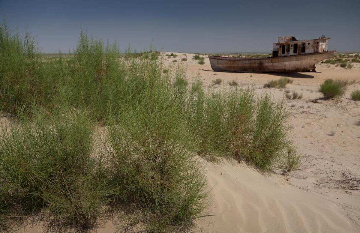 Специалисты нашли способ озеленить высохшее дно Аральского моря