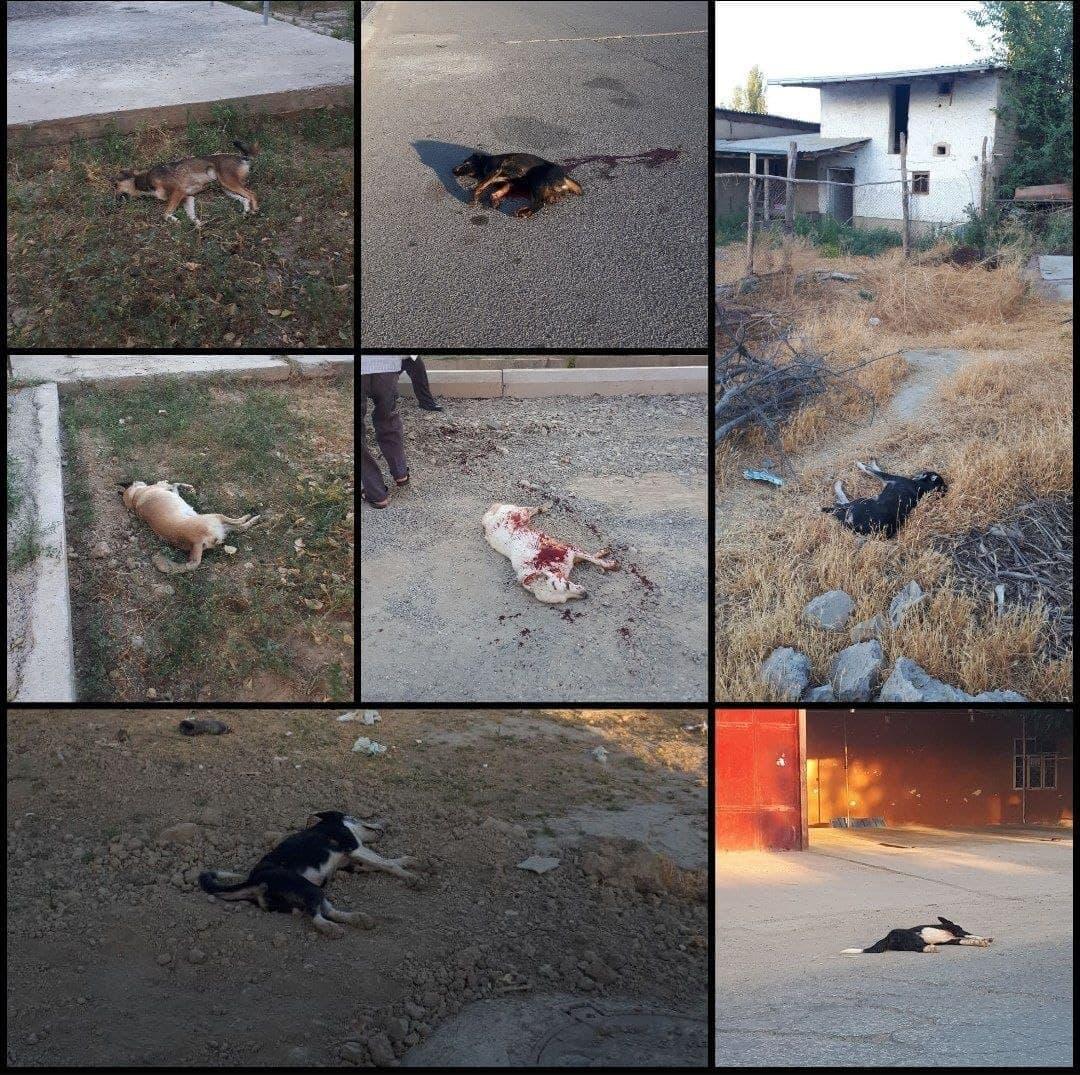В Джизаке бригада отлова застрелила семь бездомных собак