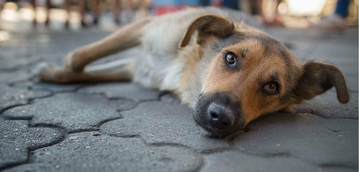 В Ташкенте мужчина привязал свою собаку к дереву и почти перерезал ей горло