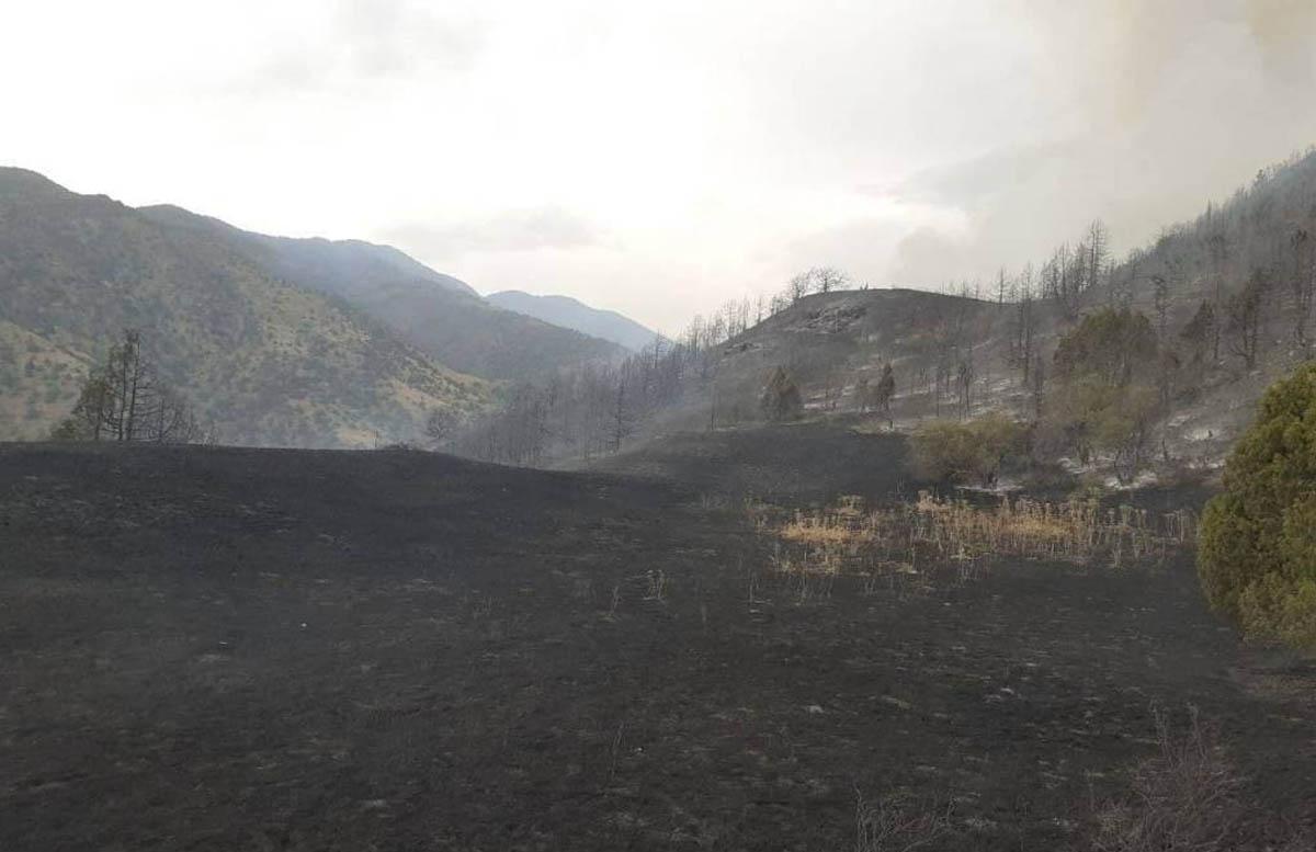 Эксперты приняли меры по снижению риска возникновения пожаров в Заамине