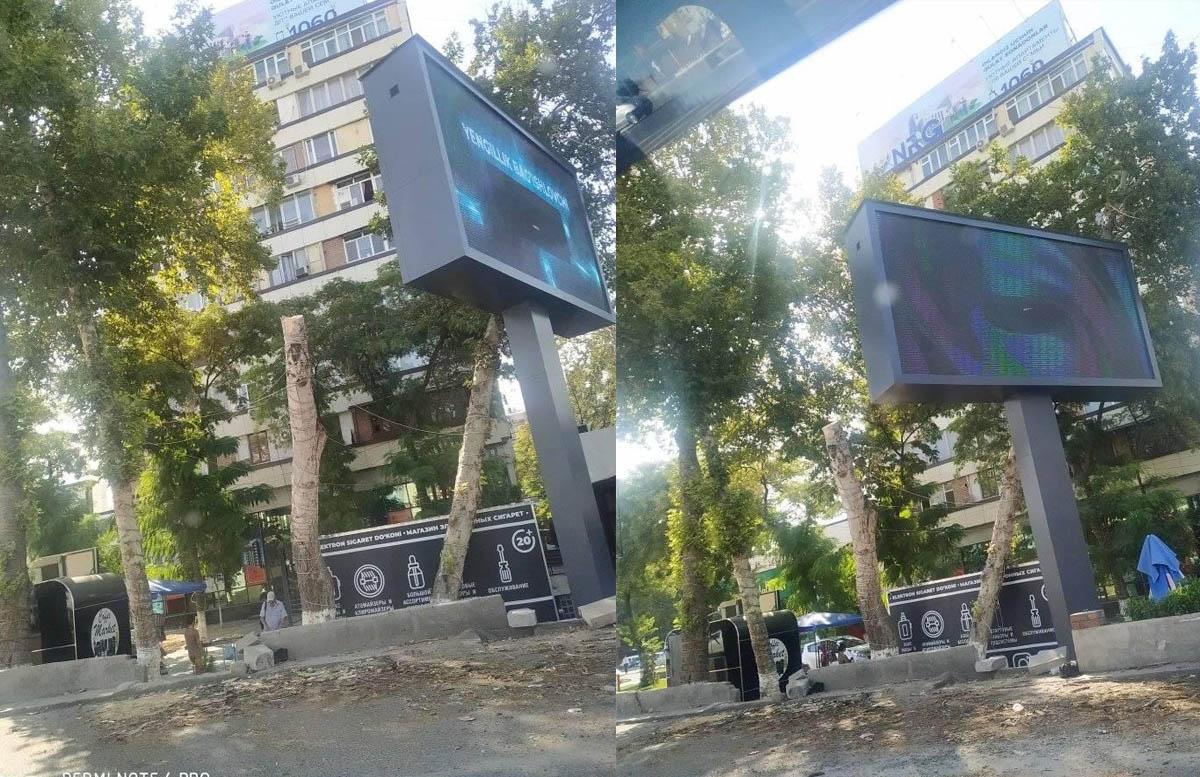 В центре Ташкента срубили многолетний тополь