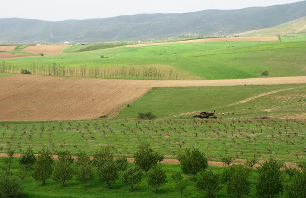 В Бостанлыке злоумышленники пытались продать землю за пять миллионов долларов