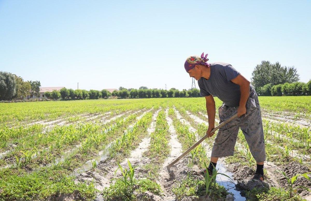 Выяснилось число случаев самовольного захвата земли в Узбекистане