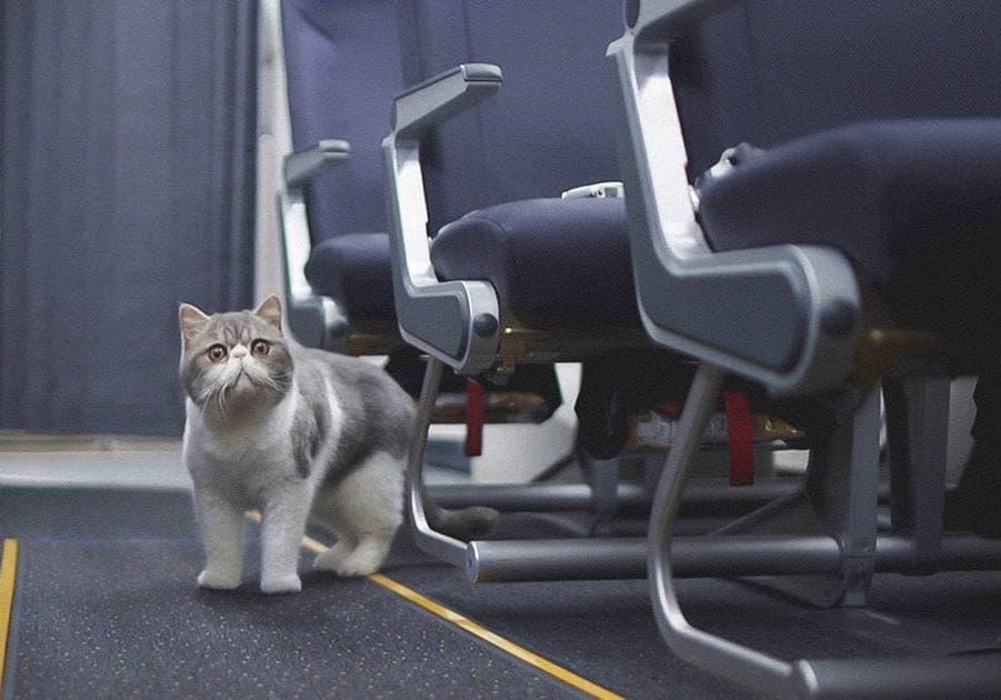 Британия выделила рейс для эвакуации собак и кошек из Афганистана