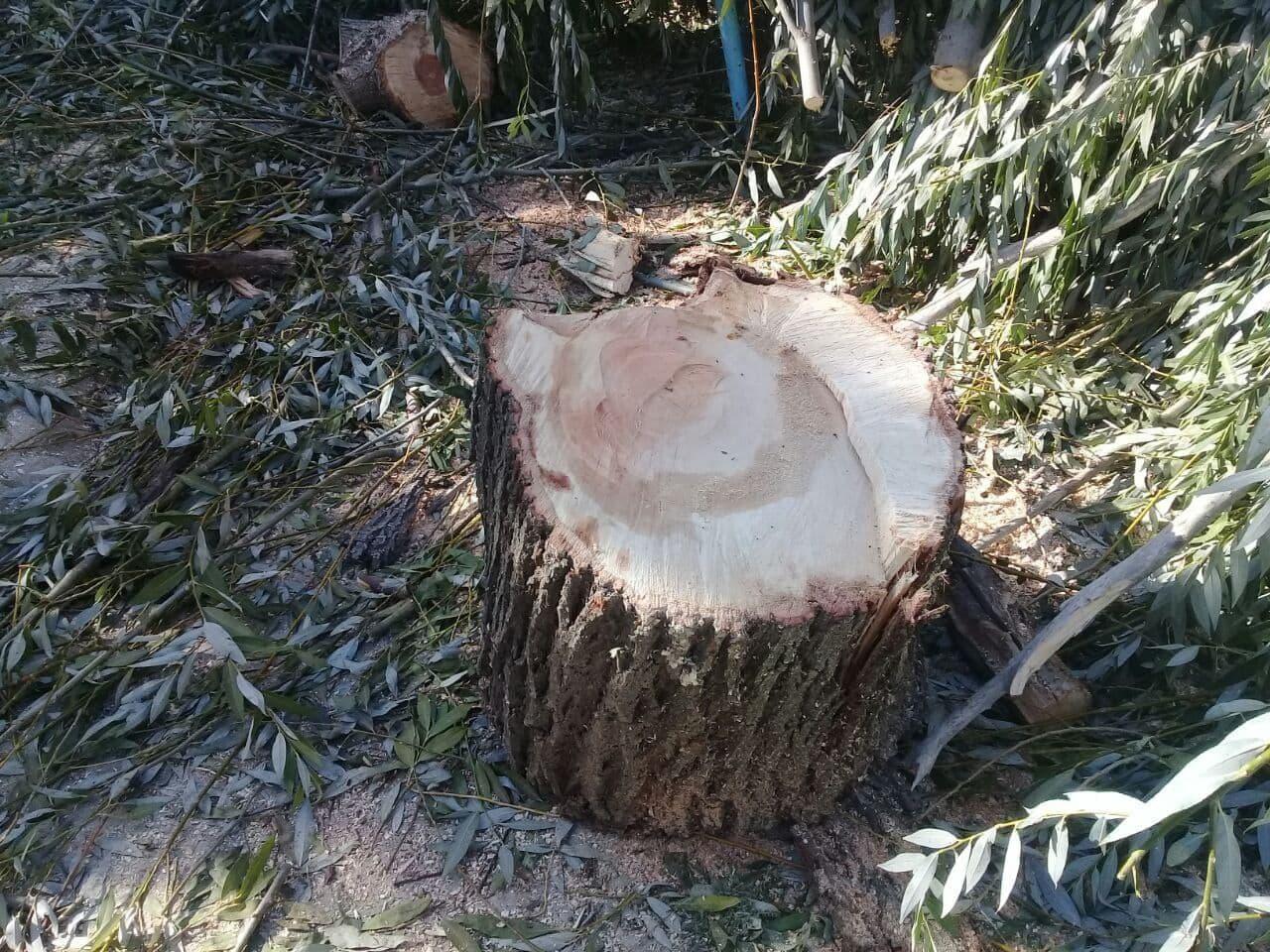 В двух областях Узбекистана поймали людей за незаконную вырубку деревьев