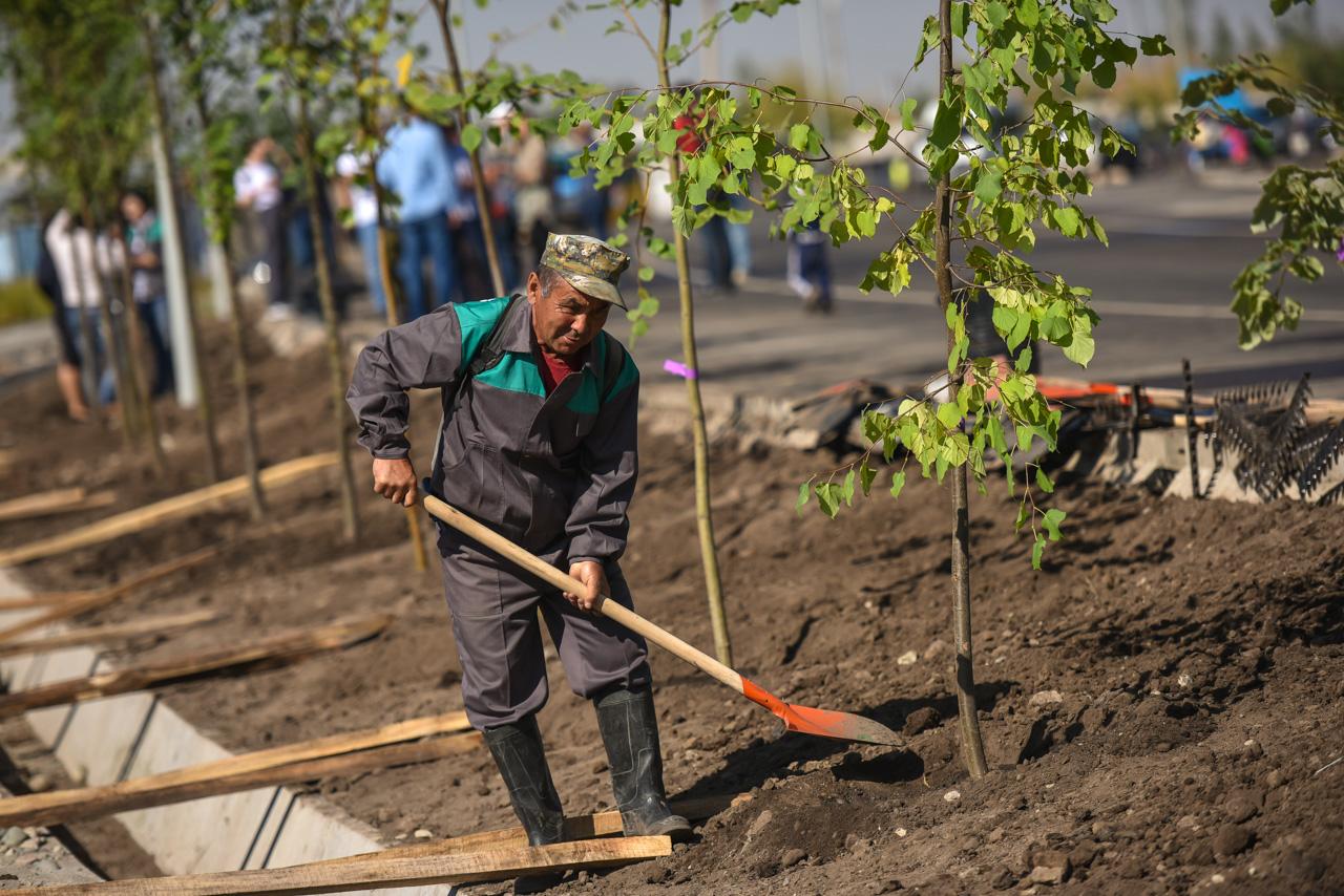 Госкомэкологии начнет собирать предложения по созданию «зеленых зон» и посадке саженцев
