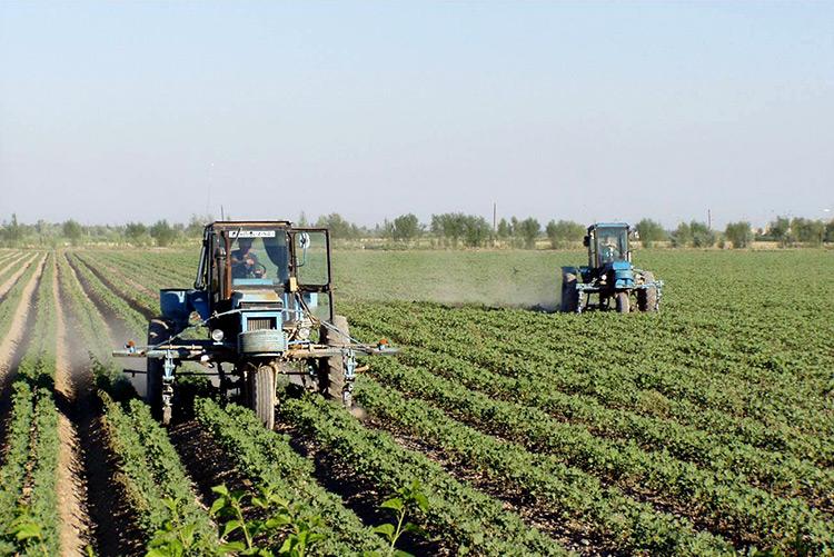 Выяснилось, на сколько планируют увеличить среднюю урожайность в Узбекистане