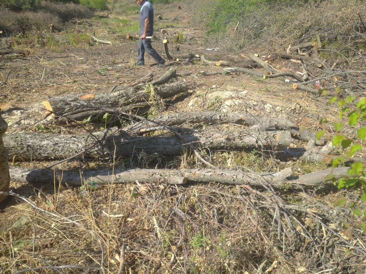 На территории курортной зоны «Амирсой» спилили более 700 деревьев