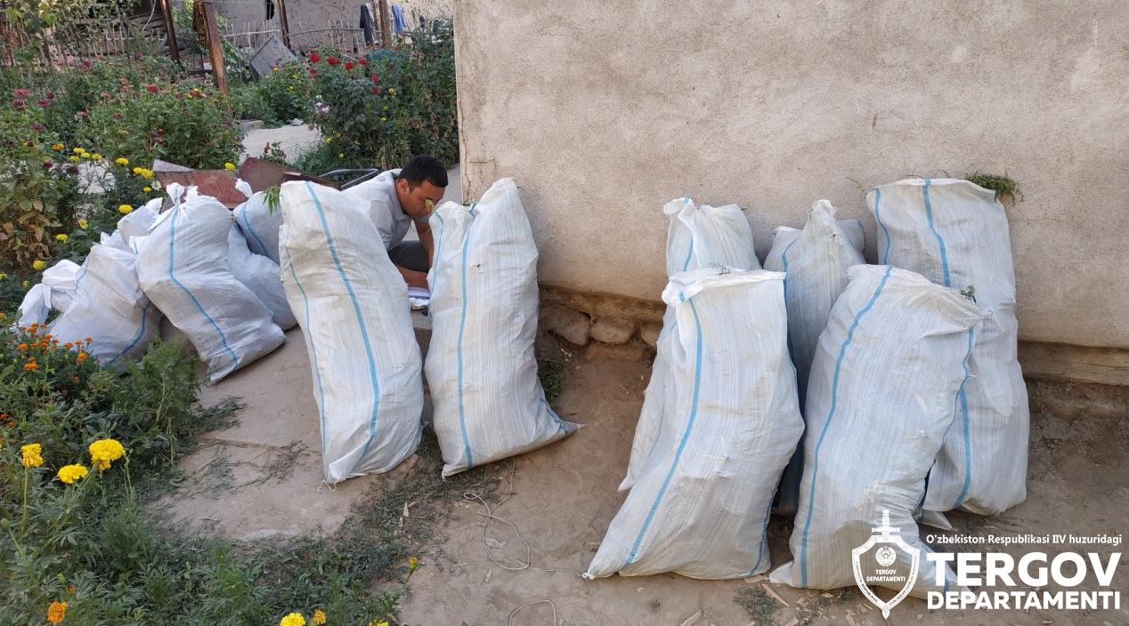 В Ташобласти местный житель организовал в своем доме плантацию конопли