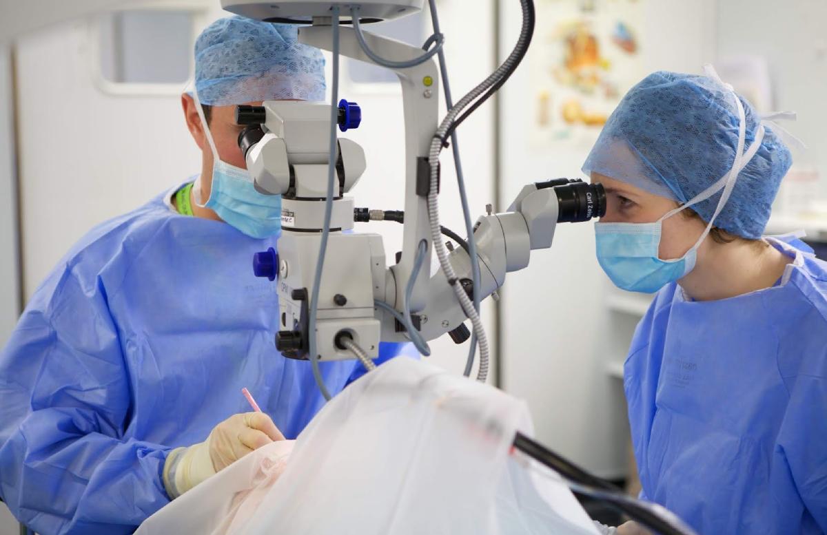 Специалисты рассказали про достижения независимого Узбекистана в сфере микрохирургии глаза