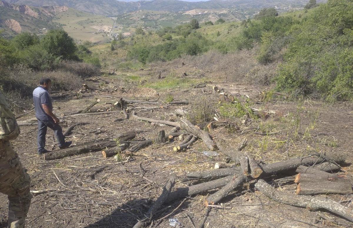 Генпрокуратура возбудила уголовное дело из-за вырубки деревьев на территории «Амирсой»