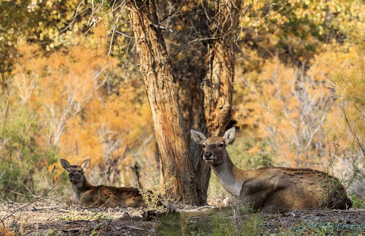 Нижне-Амударьинский заповедник отныне входит во Всемирную сеть биосферных резерватов ЮНЕСКО