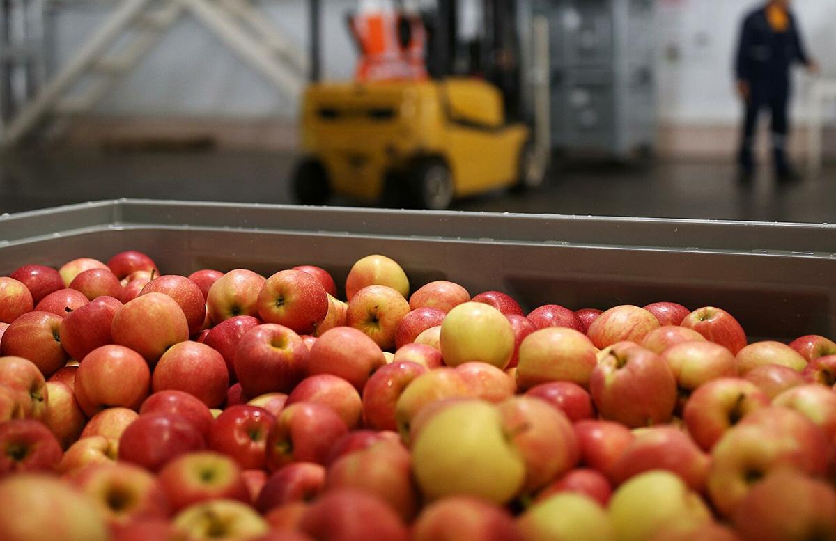 В какие страны уезжают узбекские яблоки?