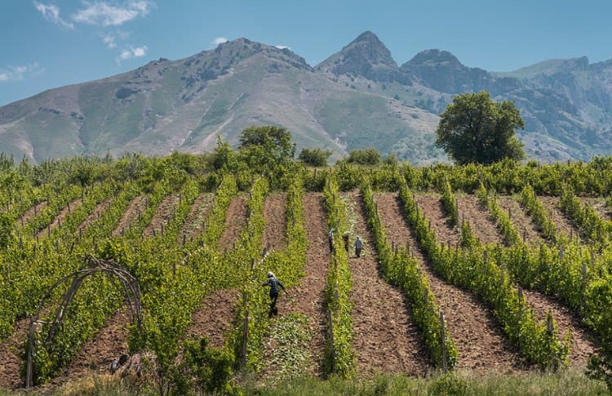 Узбекистану выделили на развитие сельской местности 275 миллионов долларов