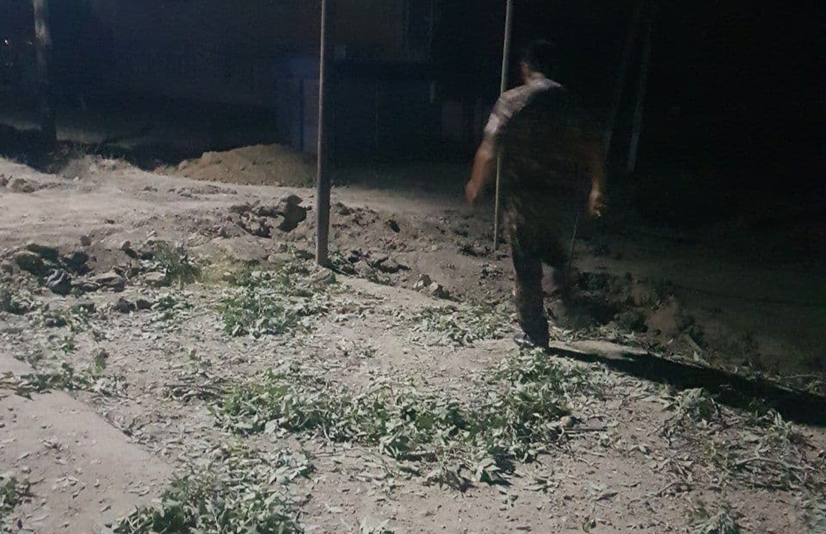 В Сырдарье трое граждан выкорчевали 13 многолетних деревьев якобы из добрых побуждений