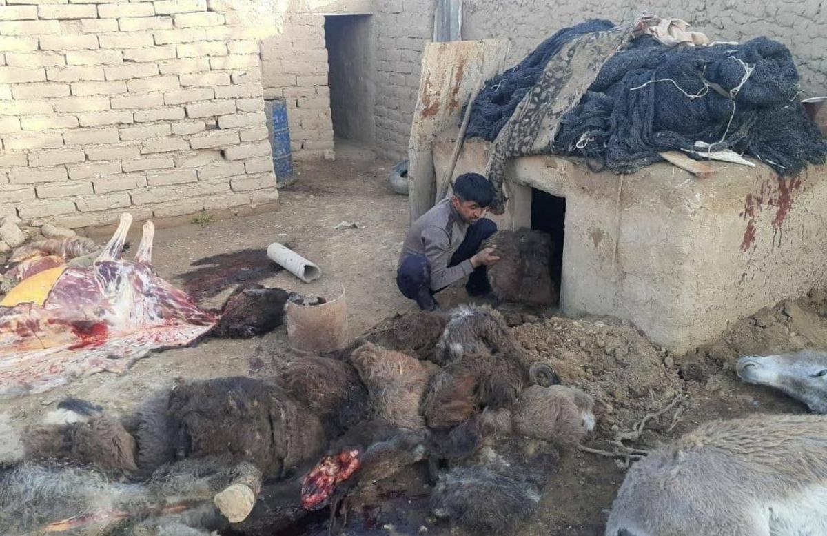 В Кашкадарье приговорили мужчину, продававшего мясо ослов