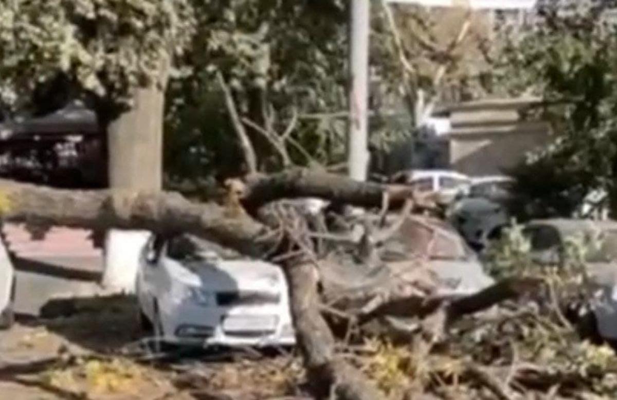 В центре столицы рухнуло дерево — видео