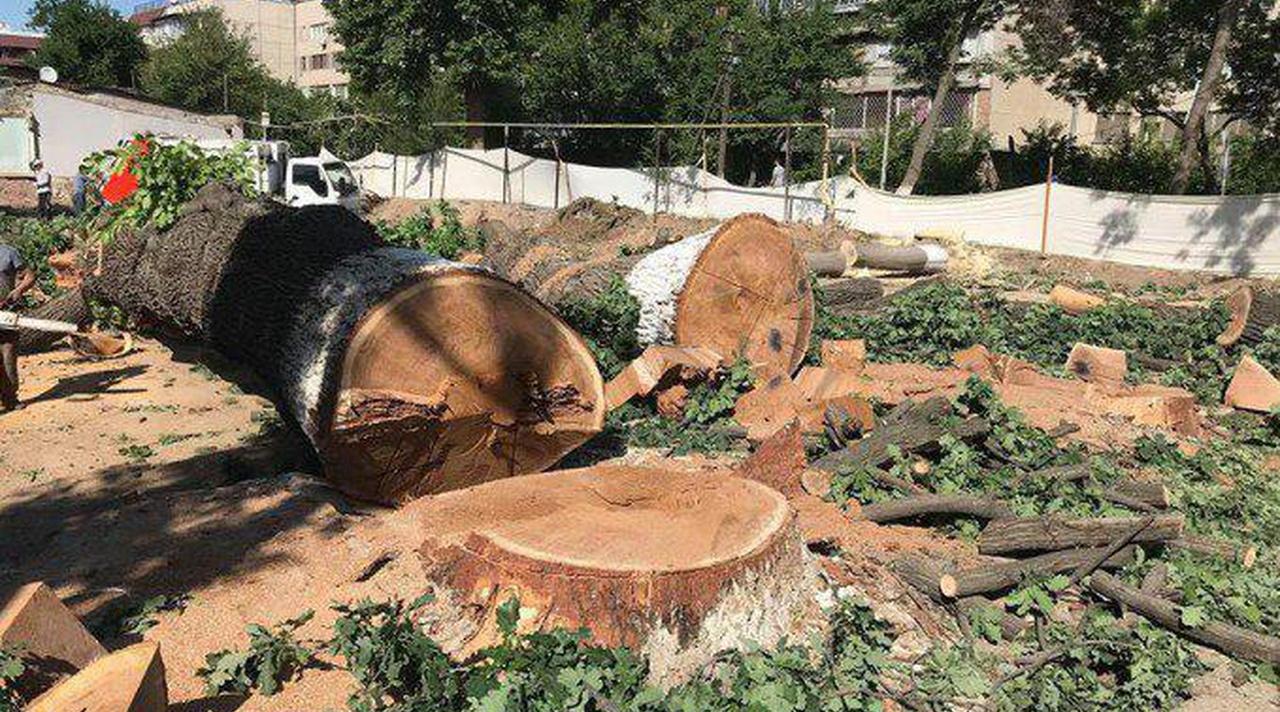 В Госкомэкологии объяснили вырубку деревьев, несмотря на мораторий – видео