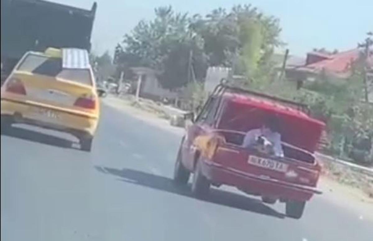 В Самарканде парень снимал свадебный кортеж из багажника движущегося автомобиля — видео