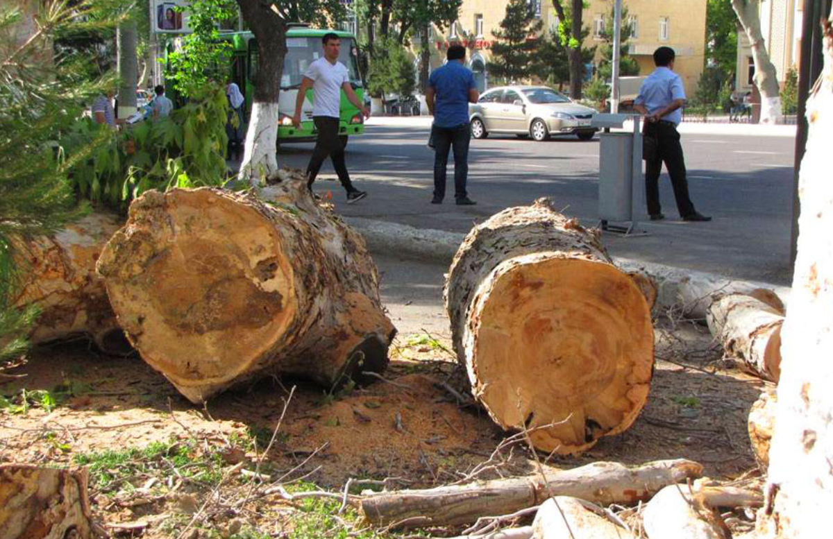 Названа сумма ежегодных штрафов за экологические нарушения в Узбекистане
