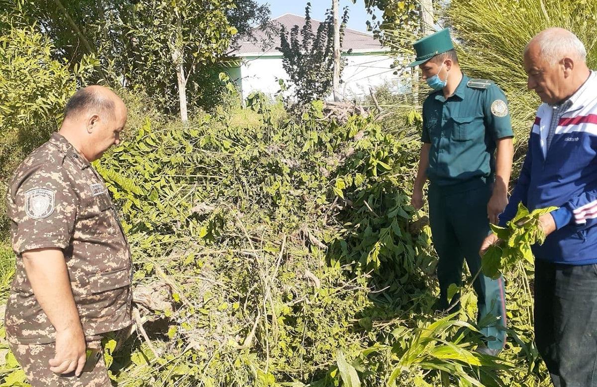 В Хорезмской области мужчина срубил 35 деревьев для самовольного строительства
