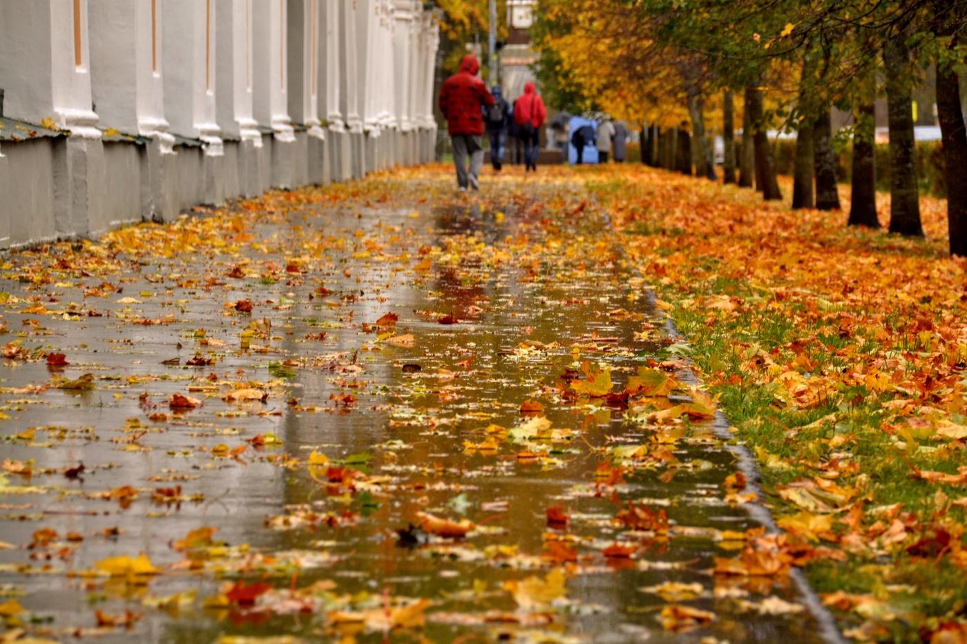 Кратковременные дожди и усиления ветра: синоптики рассказали о погоде на 1 октября