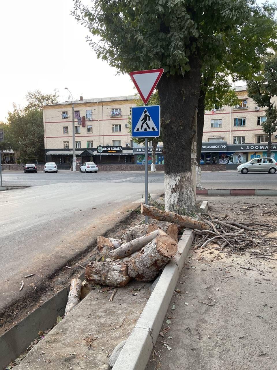 Возле здания Ташкентской городской прокуратуры вырубили несколько здоровых деревьев