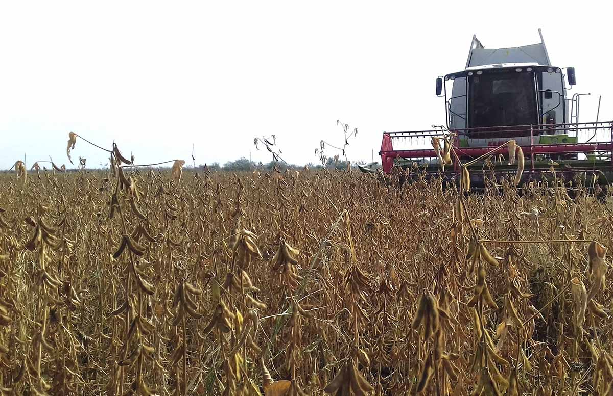 Известны принятые меры для избежания повышения цен на растительное масло
